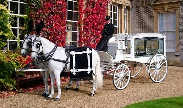 White horse-drawn hearse